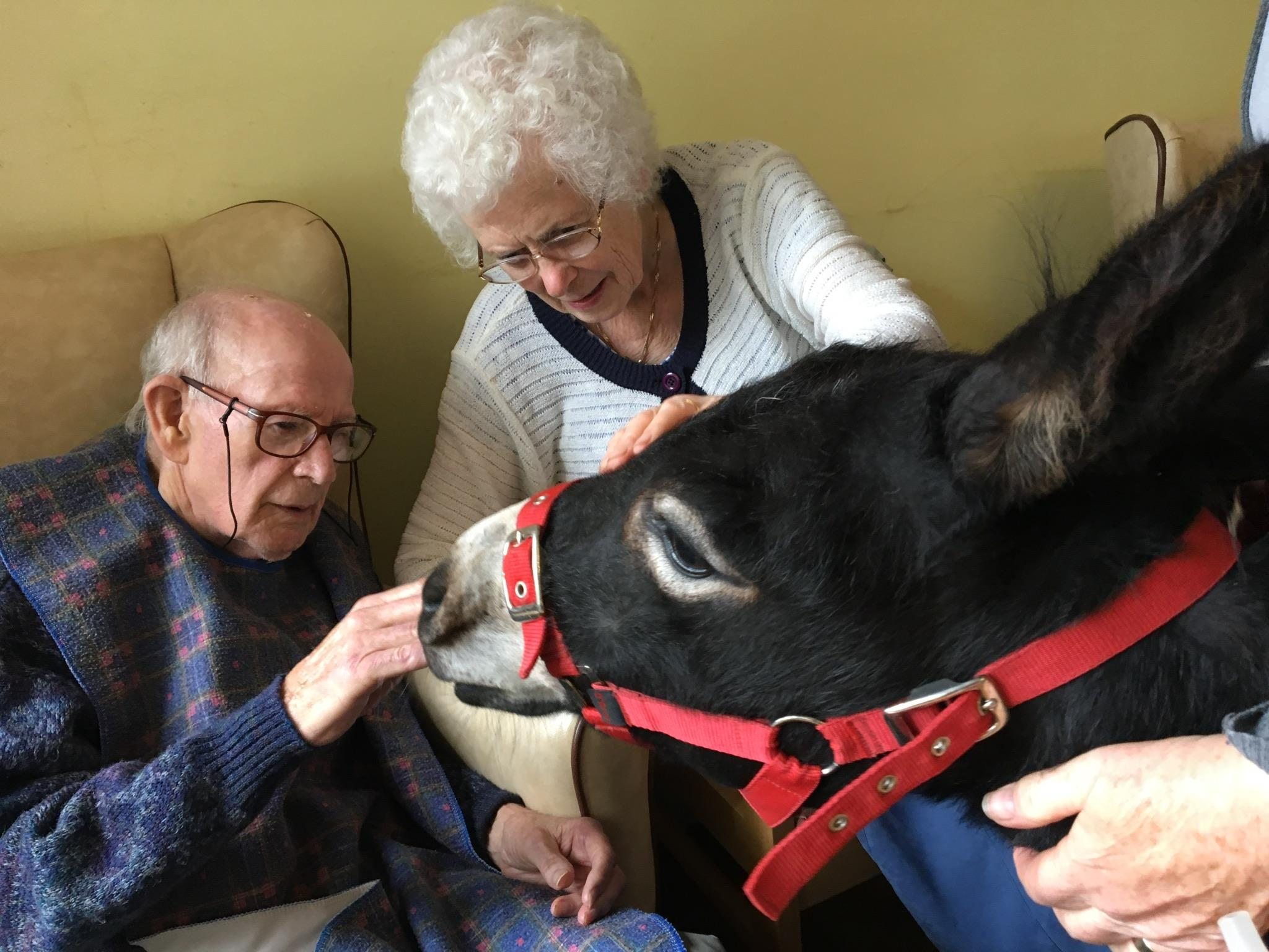 Magical effect of donkeys in care homes!