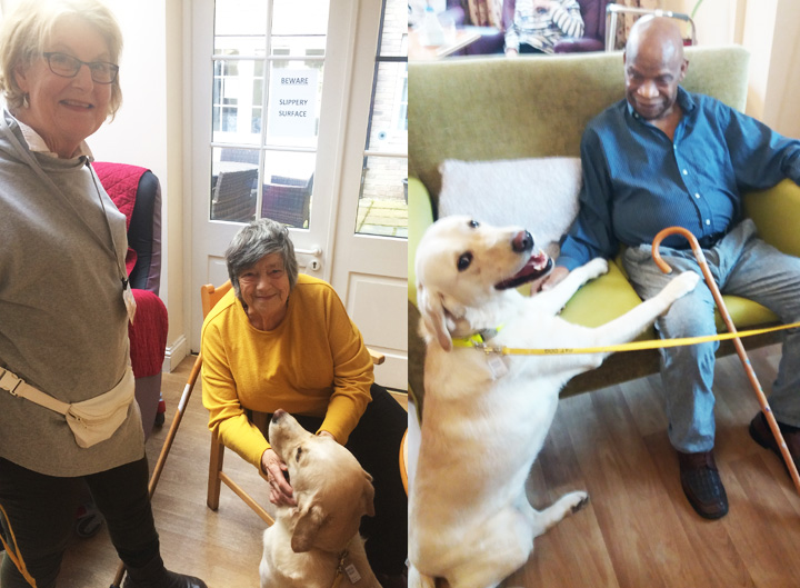 PAT dog Izzy delights residents at Oaklands