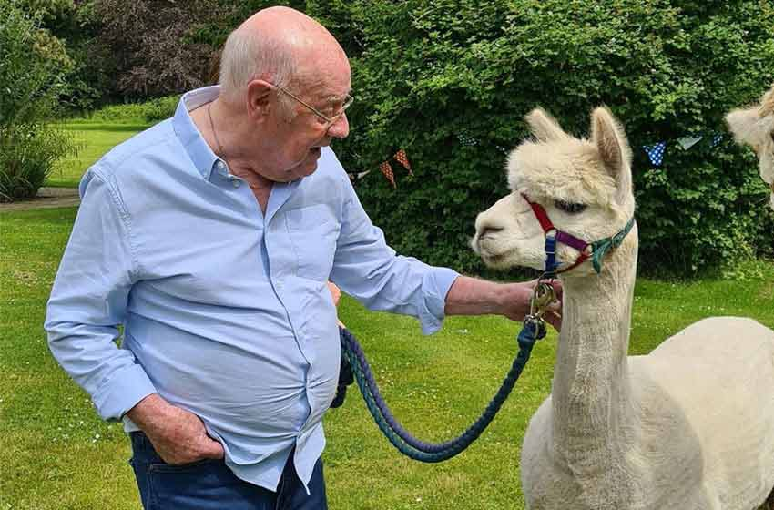 Alpacas bring cheer to residents at Norfolk care home