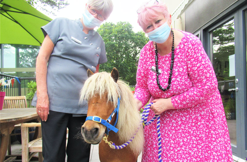 A Shetland pony called Mr Kelloggs delights Branksome Heights residents